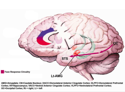 Podcast: How Brain Captures Emotions
