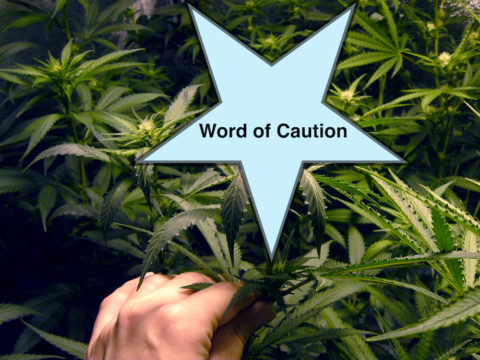 Podcast: Words of caution regarding cannabis